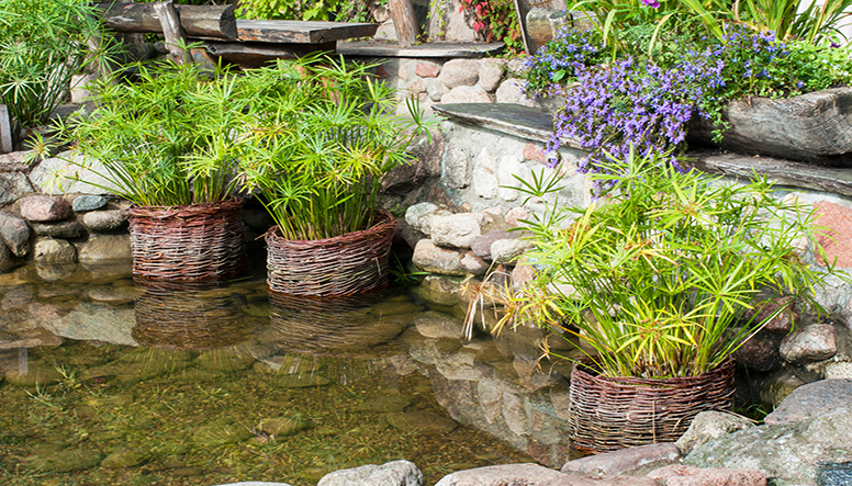 the top 7 landscape design trends for 2017 - Garden Design Trends 2017
