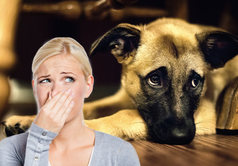 Image result for selling home with pet odor