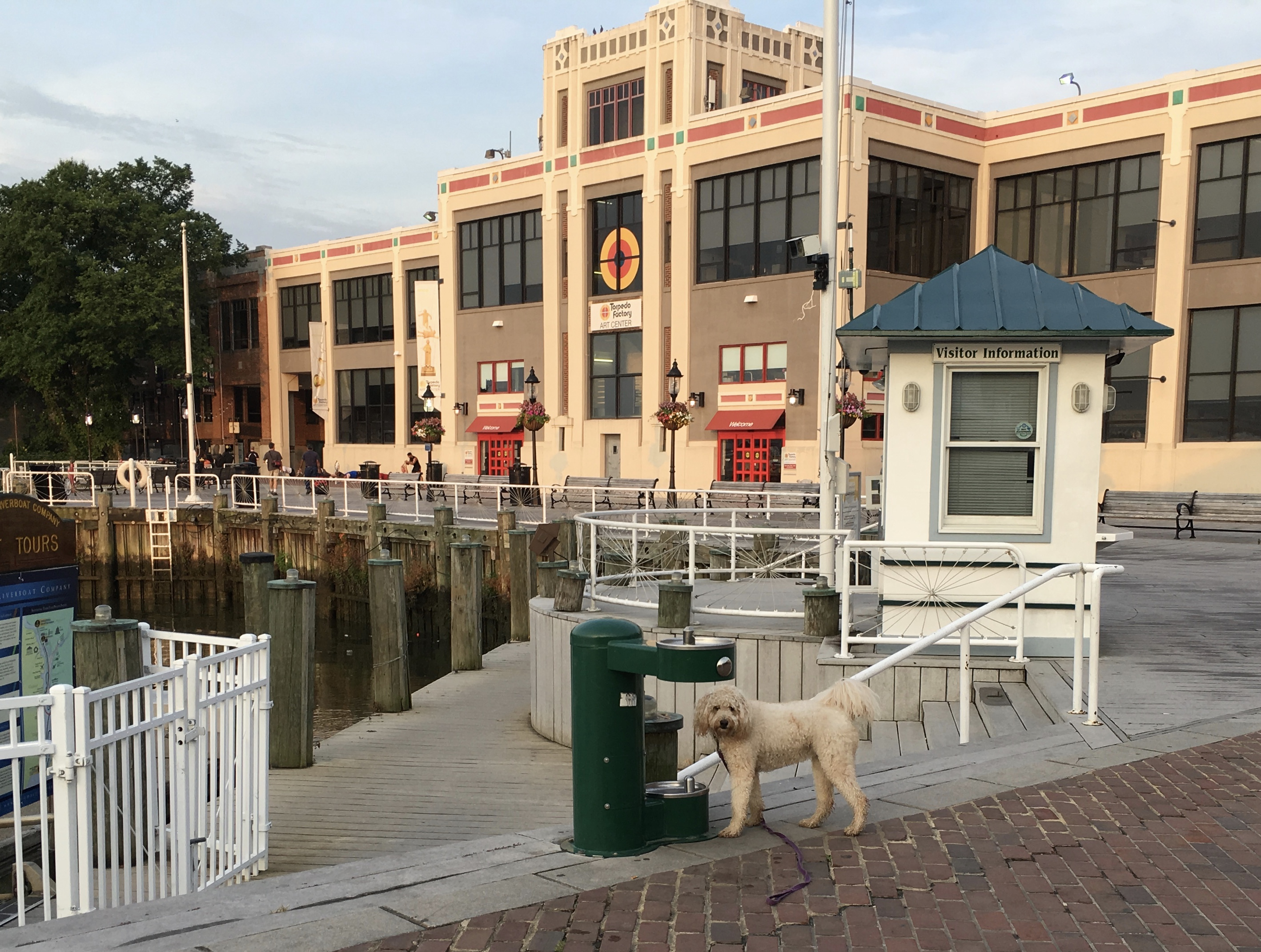 Alexandria VA dog walking experience