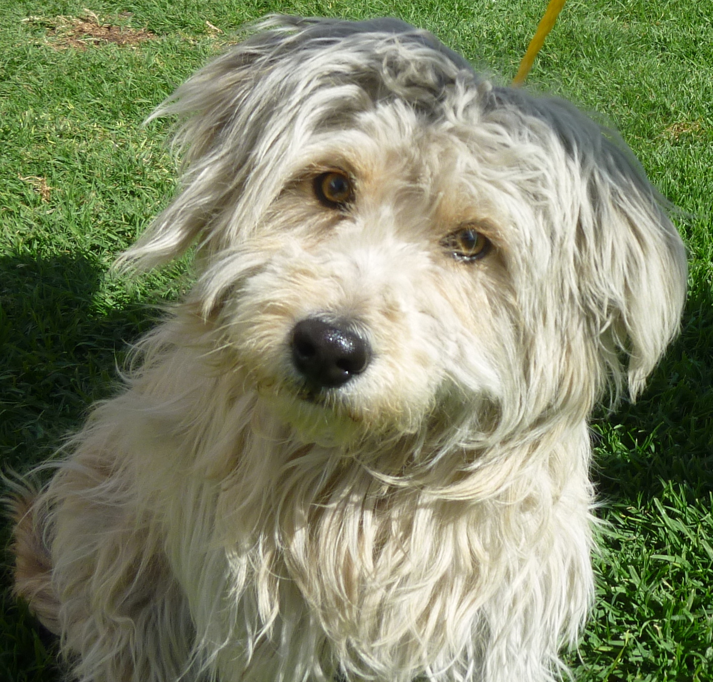 little shaggy dog breeds howard county real estate shaggy dog maryland eileen robbins team of