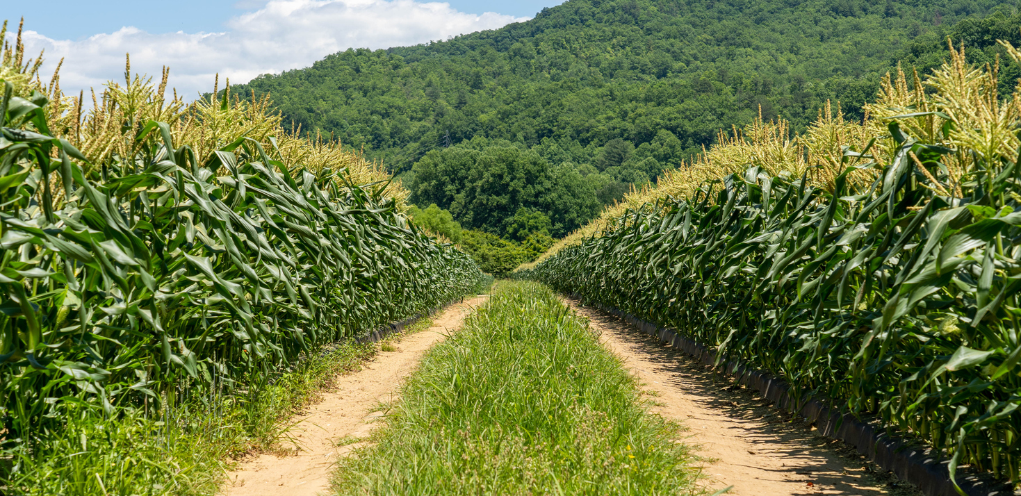 How much does it cost to start a farm in WNC? Corn