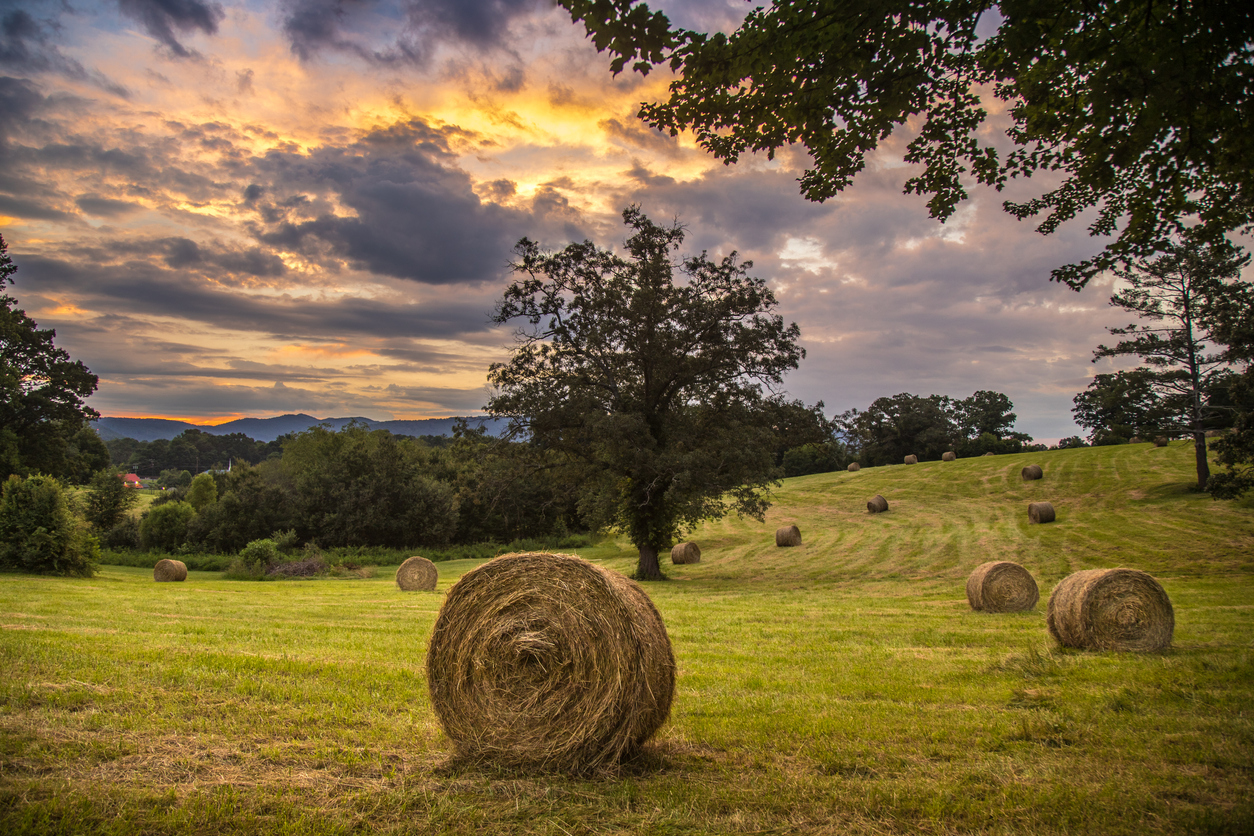 How much does it cost to start a farm?
