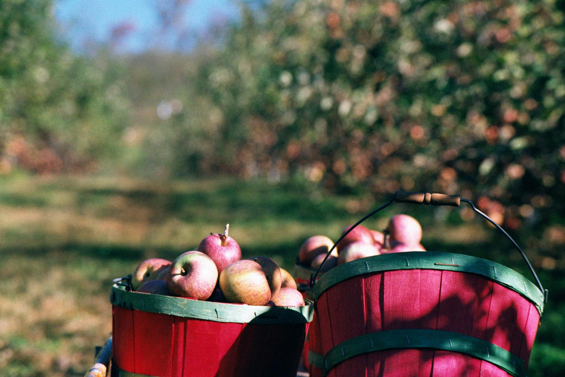 Asheville Autumn Activities Fall Apple Picking