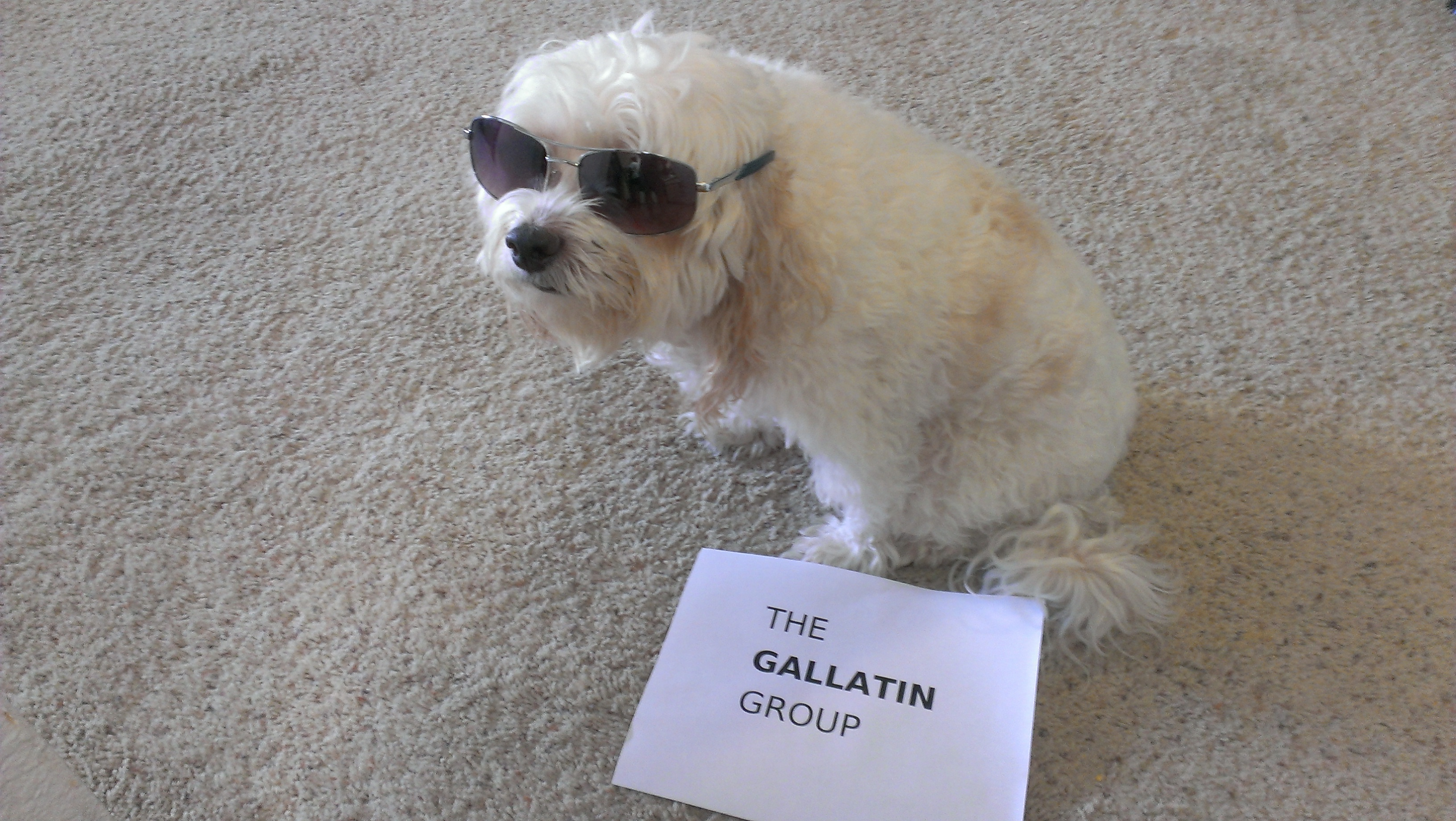 Buddy-Honorary spokesdog for The Gallatin Group