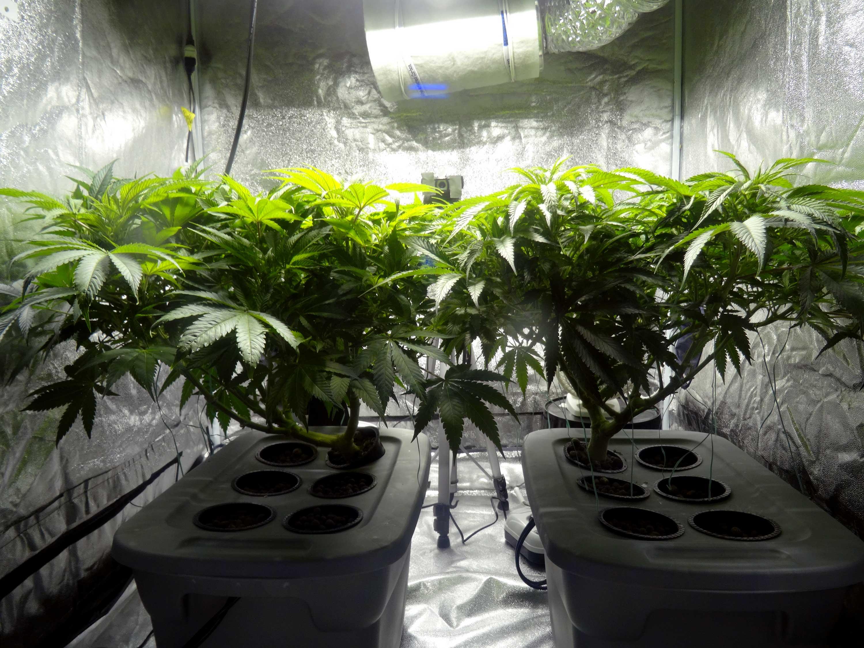 Colorado Real Estate Marijuana Jessica Shada Wiring Up Grow Lights Residential Grows In