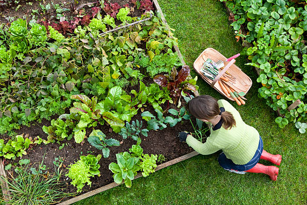 Does a vegetable garden add value to a home? Real estate experts weigh in