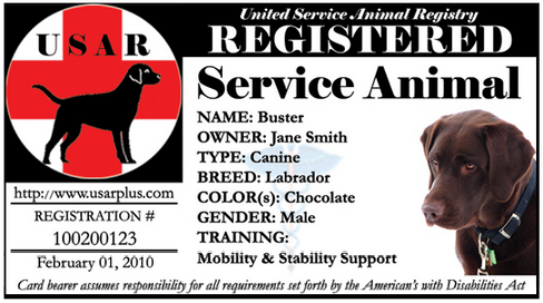 graphic regarding Printable Service Dog Papers known as Services Doggy Certification Template Free of charge Graph Pedia
