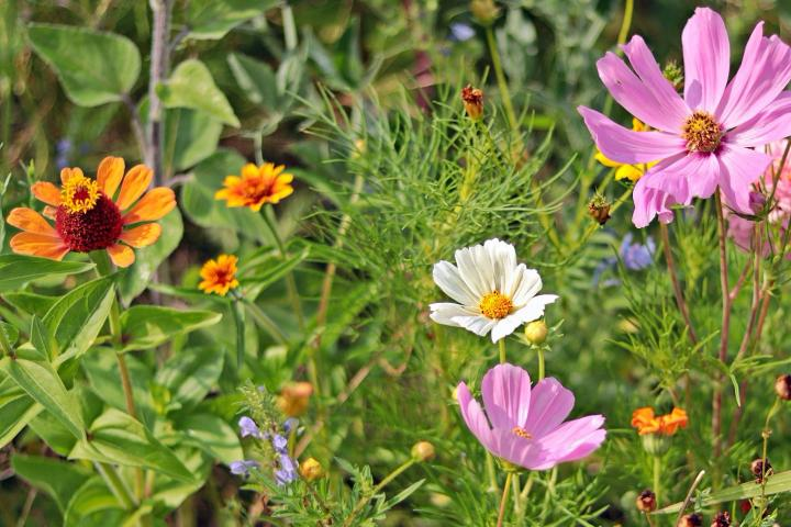 When to Plant Flowers?
