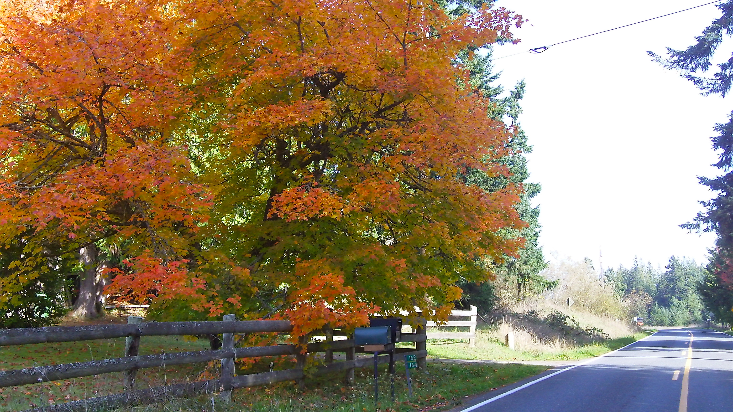 Fall in Sequim