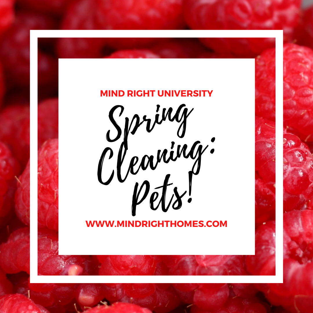 Especially for Pets: A Spring Cleaning Checklist