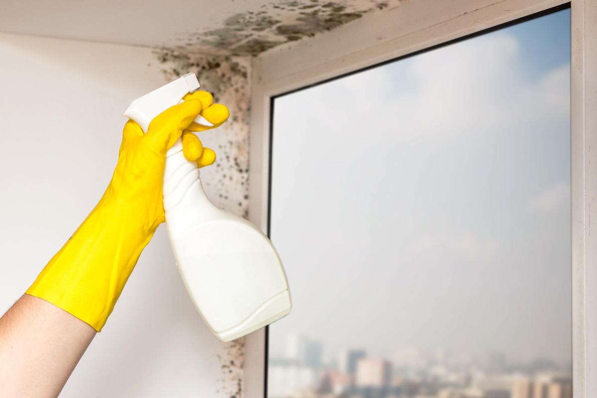 Mold Vs. Mildew: How To Tell The Difference And Get Rid Of Both