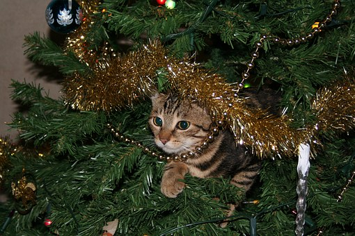 App Weihnachtsbilder.Holiday Safety Tips For Pets The Gaskill Group