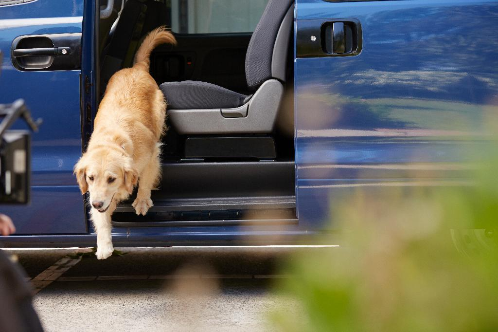 House Hunting with Your Pet in Mind. Dog getting out of van at home.