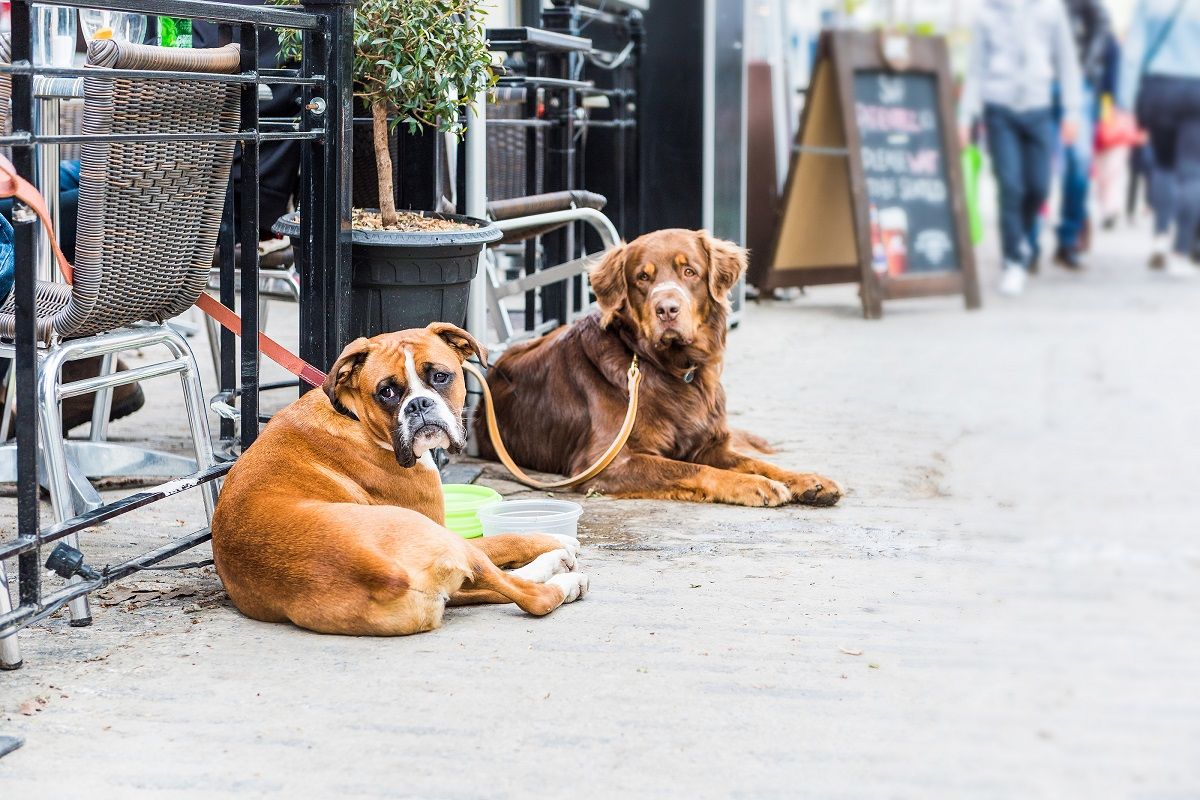 2 dogs at restaurant outdoor dining area