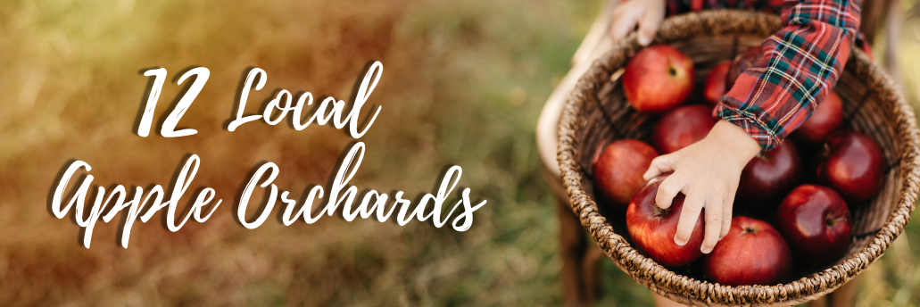 12 Local Apple Orchards Banner