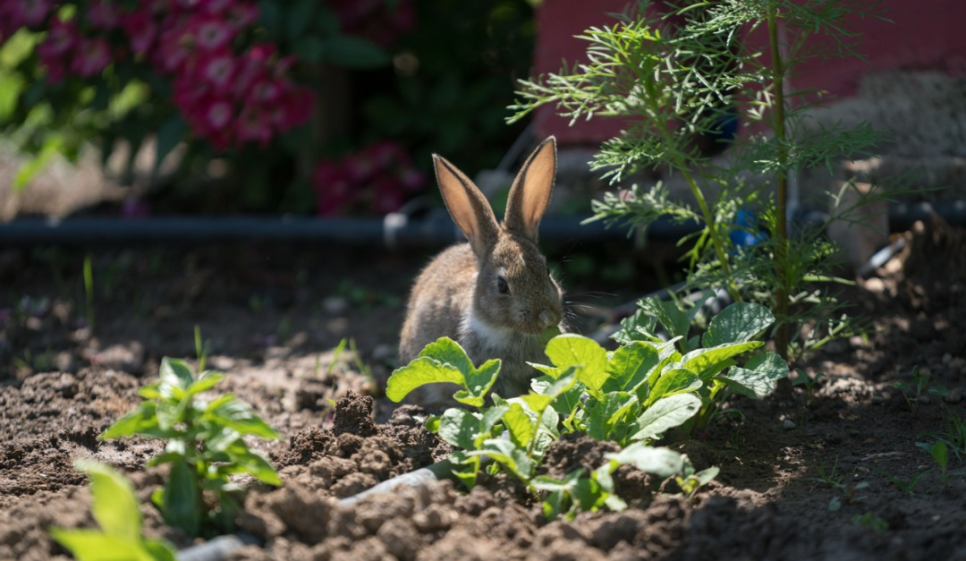 How to Protect Your Garden From Wild Animals