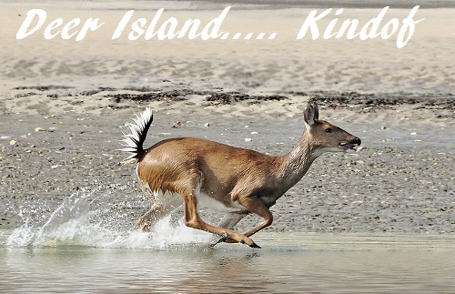 Deer Island Homes For Sale Winter Garden Florida 34787 Damon Duvall Realtor