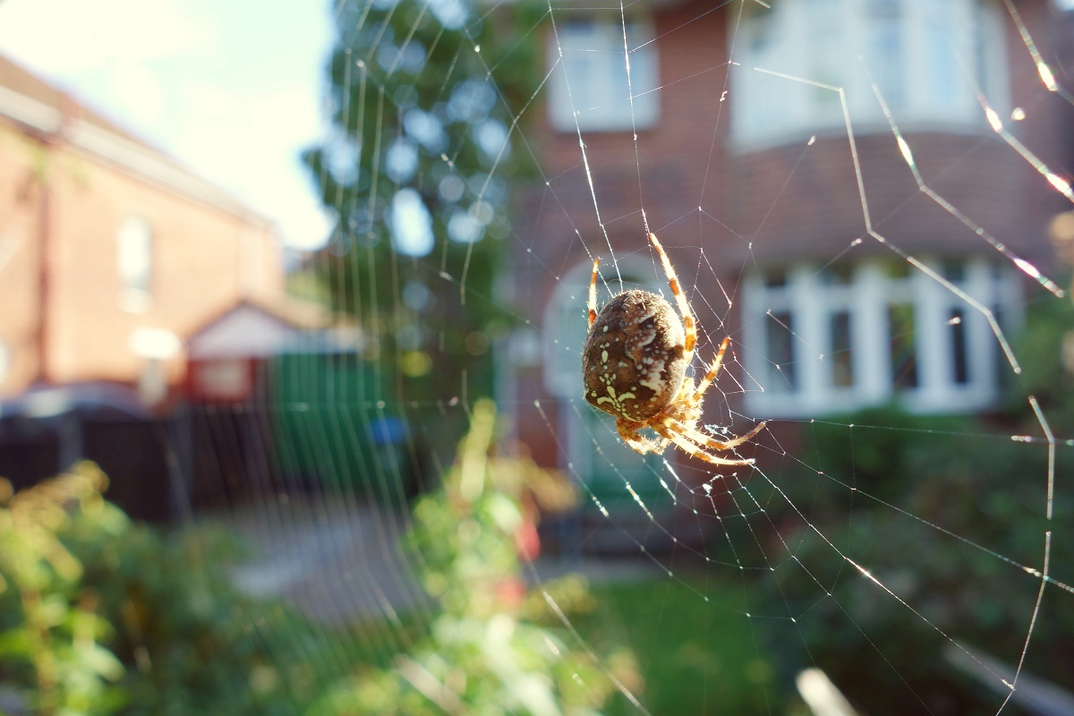 remove webs and exercise good sanitation practices to eliminate spiders