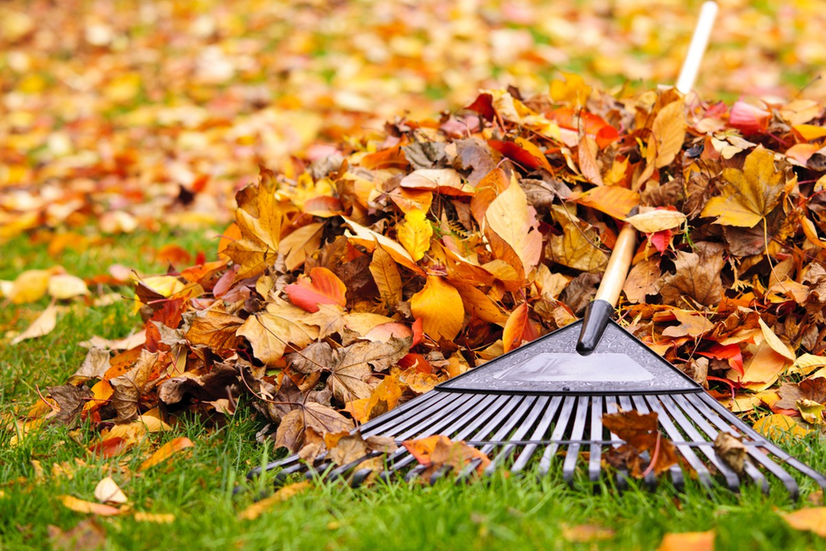 6 Ways to Prep Your Yard for Winter