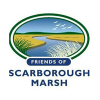 credit: Friends of the Scarborough Marsh