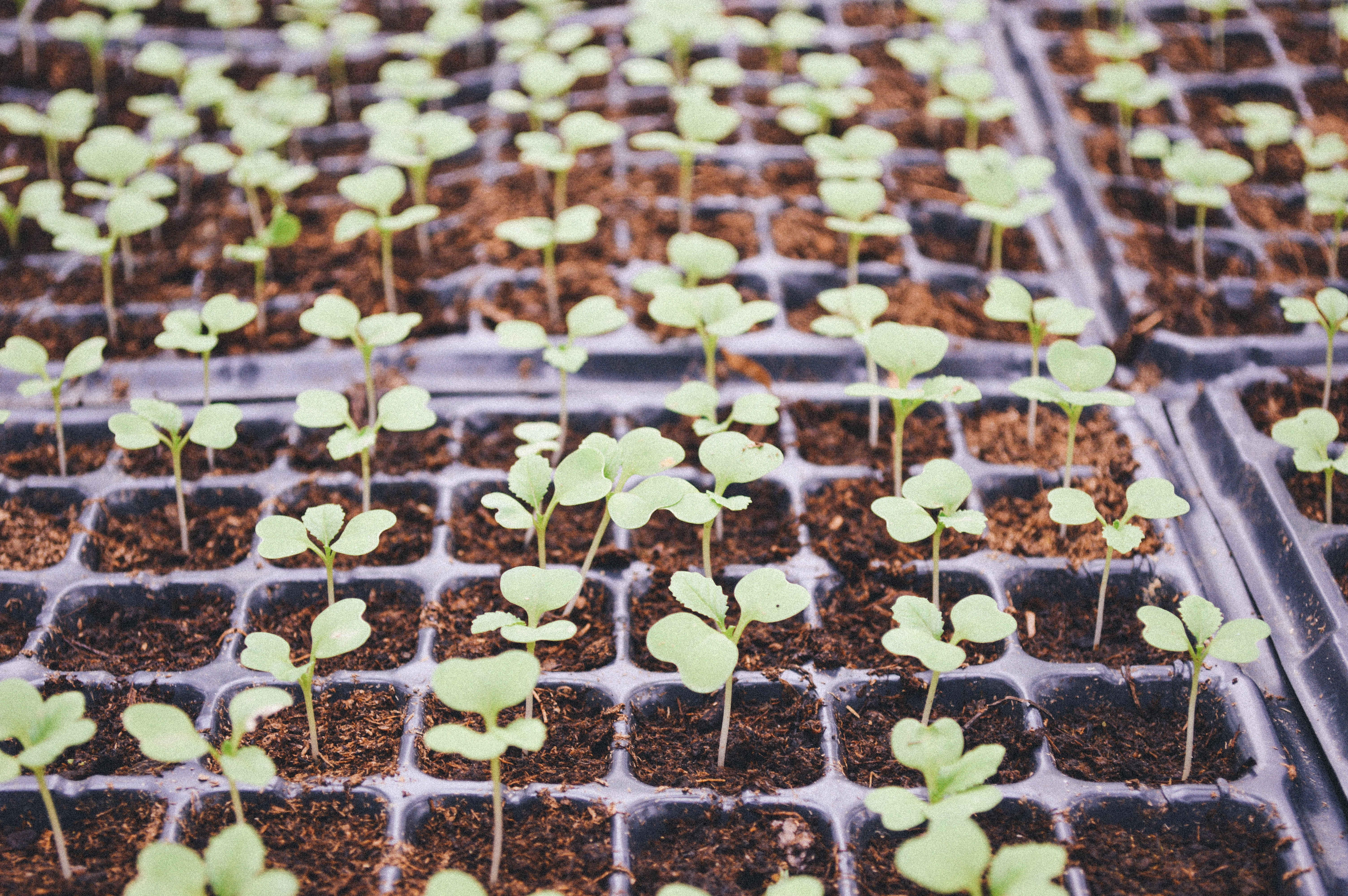 Tips for Starting Your Seedlings This Spring