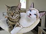 Tiberius and Gigi