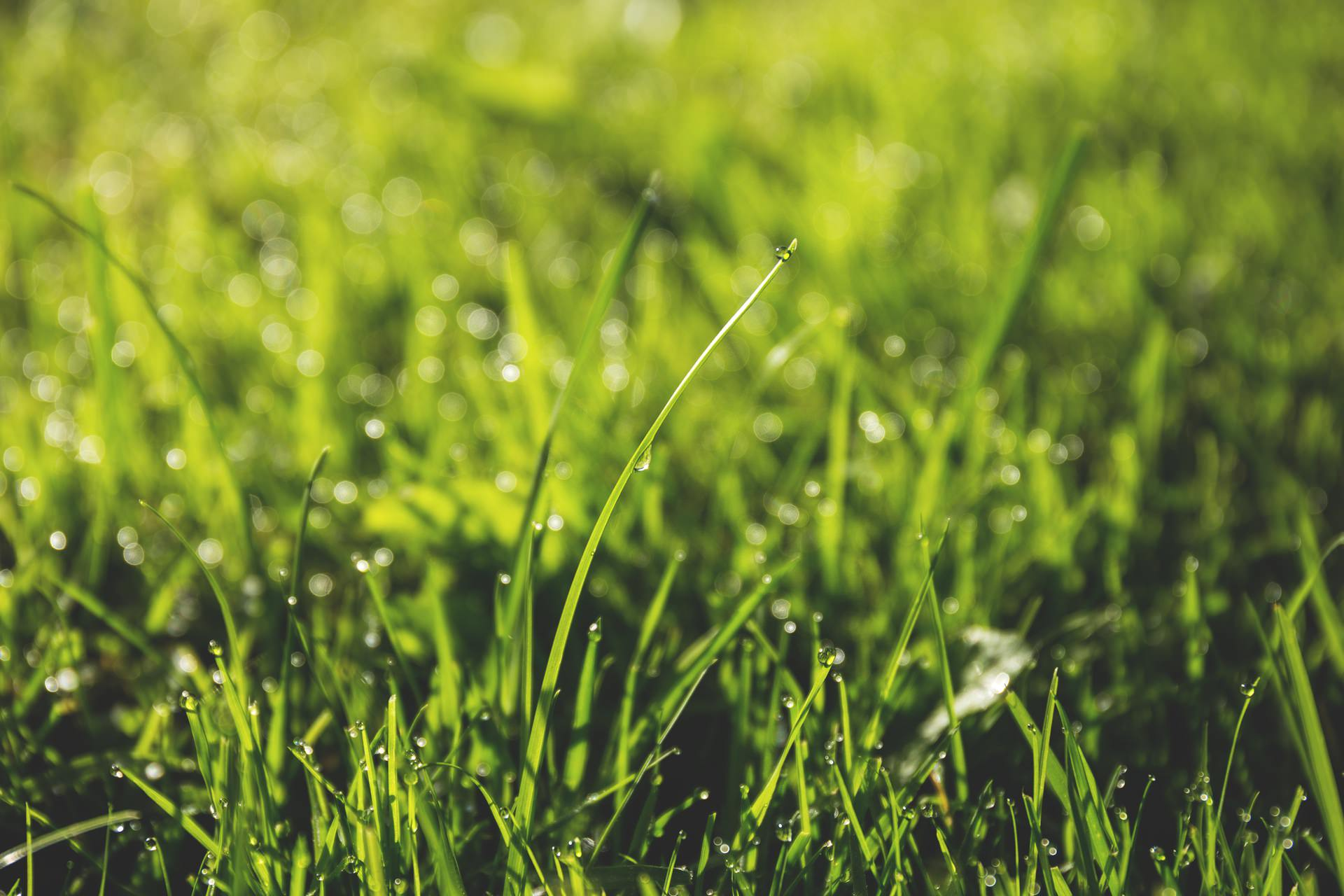 ​Taking Care of Your Southern Maryland Lawn Without Wasting Resources
