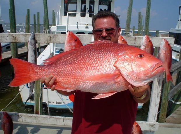 Red Snapper of Gulf Shores