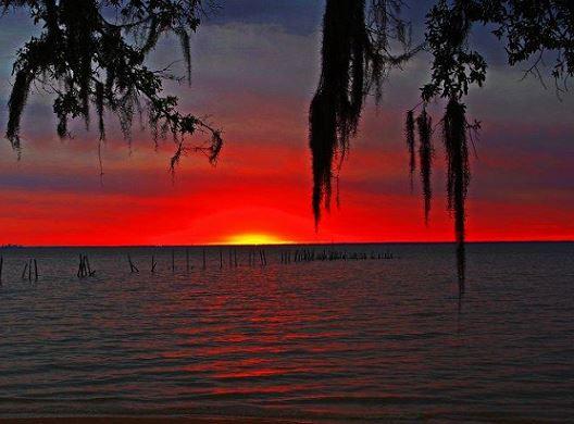 Daphne Red Sunset