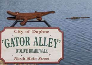 Daphne Gator Alley