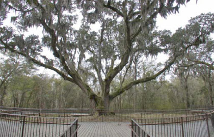 Daphne View Point Park Preserve
