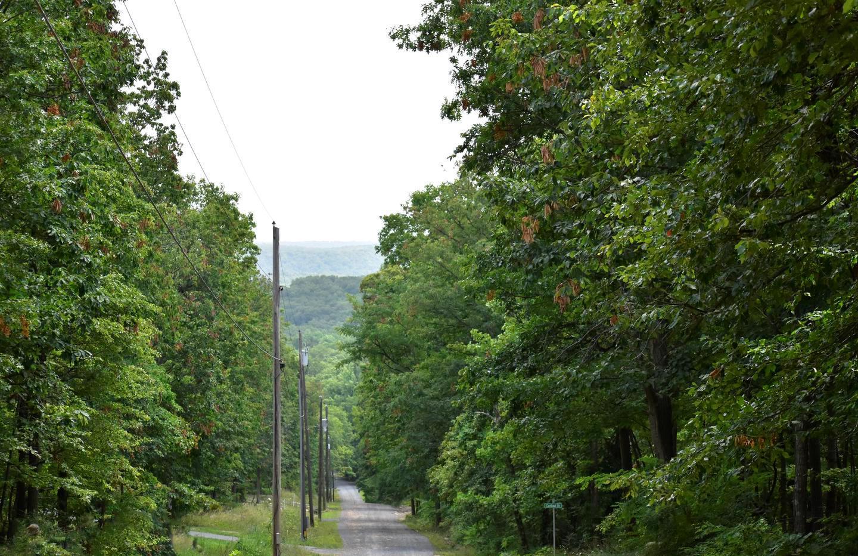 Fox Trail   Winchester