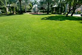 TAKING CARE OF YOUR FORT LAUDERDALE LAWN WITHOUT WASTING RESOURCES
