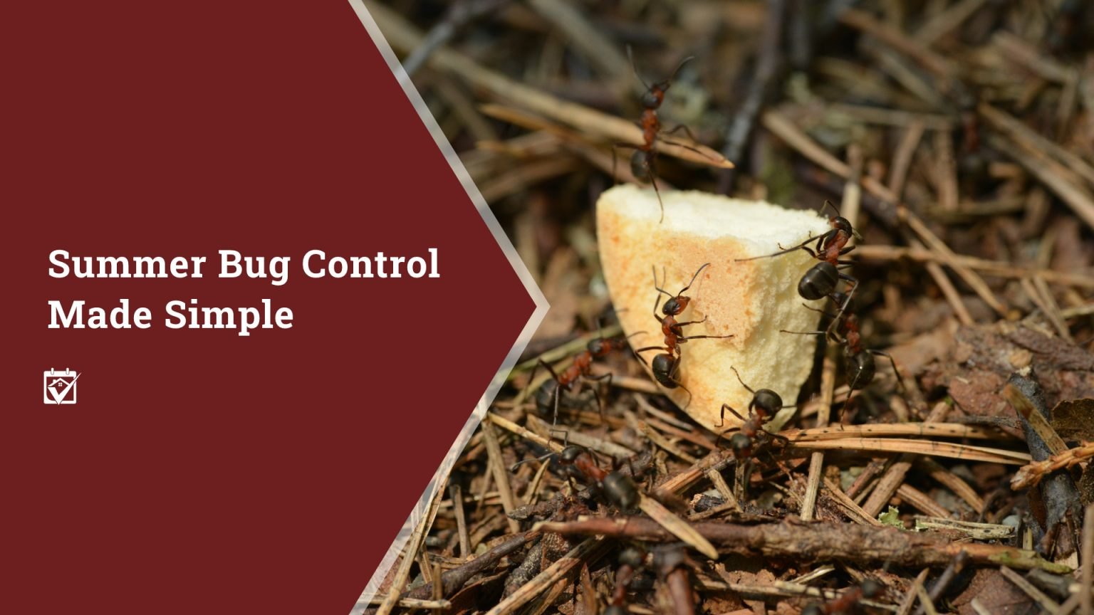 Summer Bug Control Made Simple