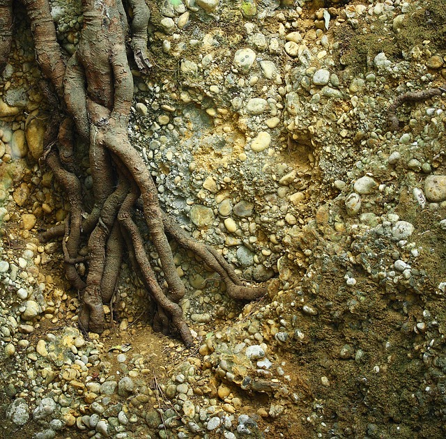 Roots are a major problem for sewer lines | Real Estate Problems