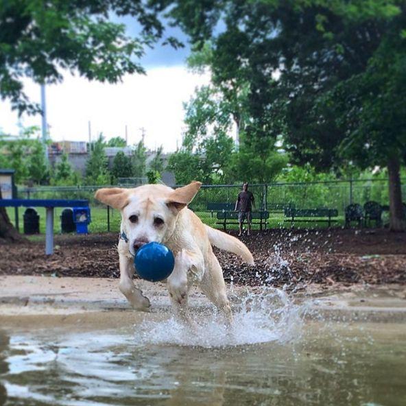 Maplewood Dog Park