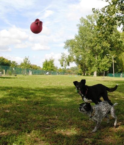 South West City Dog Park (Wilmore Park)
