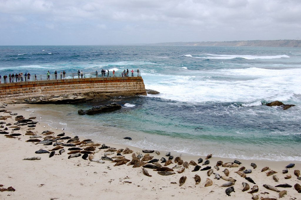 Childrens Beach La Jolla, California Landmark.