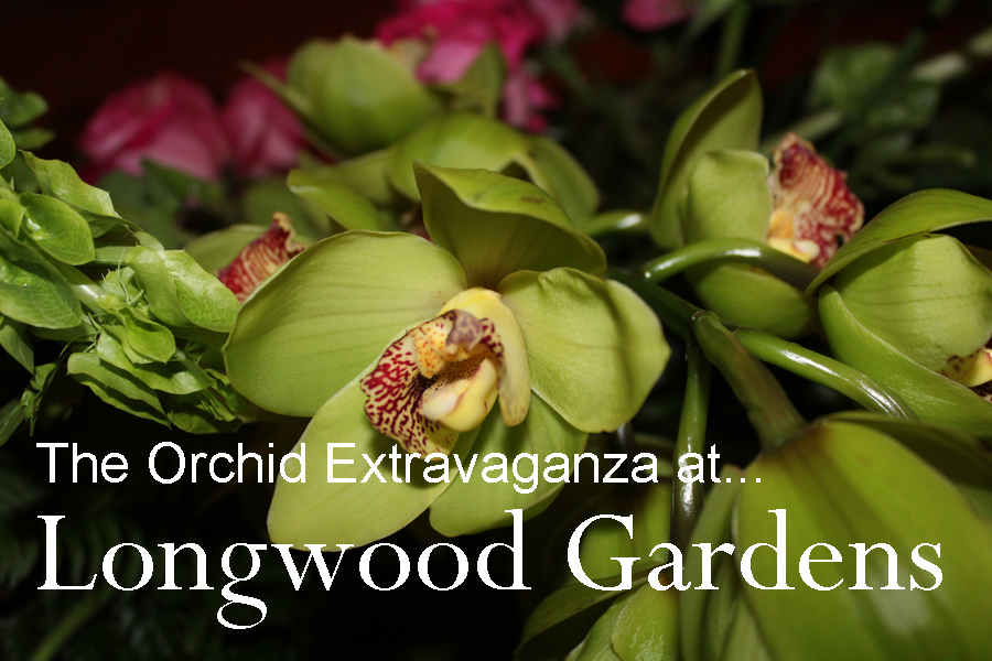 Orchid Extravaganza at Longwood Gardens! - Moving With Molnar...for ...