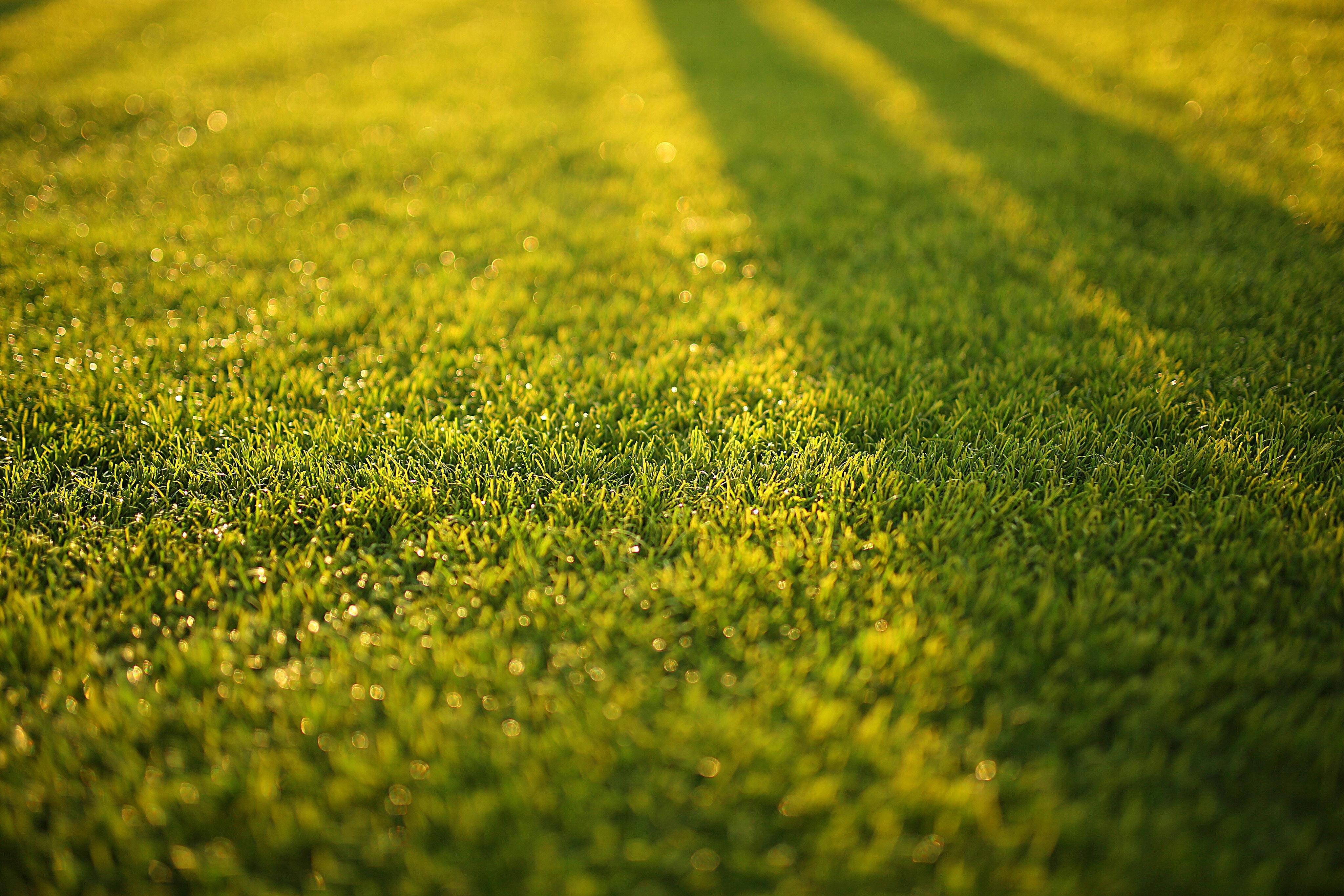 The 10 Best Lawn Maintenance Projects Based On How Much Time You Have
