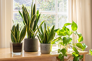Keep Your House Plants Alive!