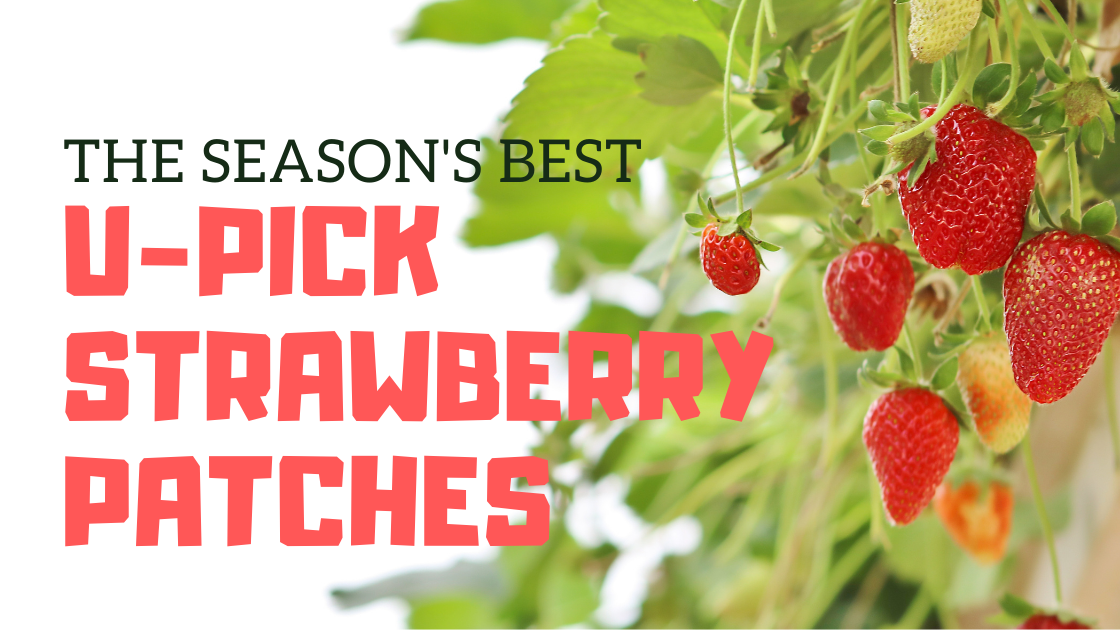 The Season's Best Strawberry Patches