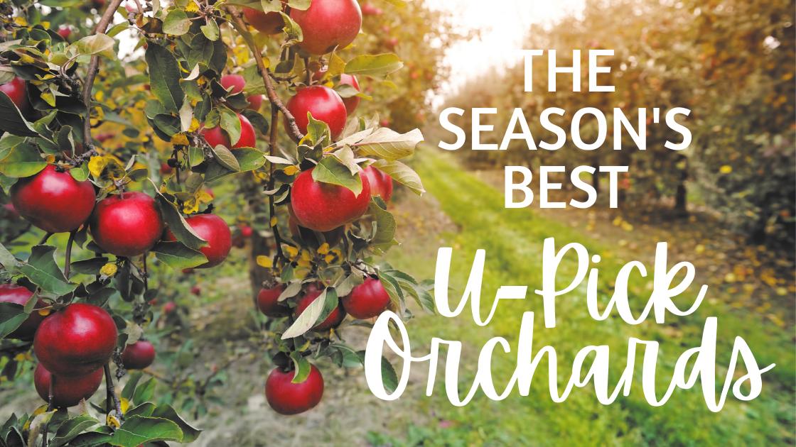 Georgia's Best U-Pick Apple Orchards