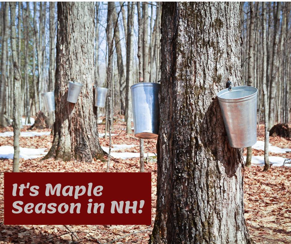Maple Season in NH